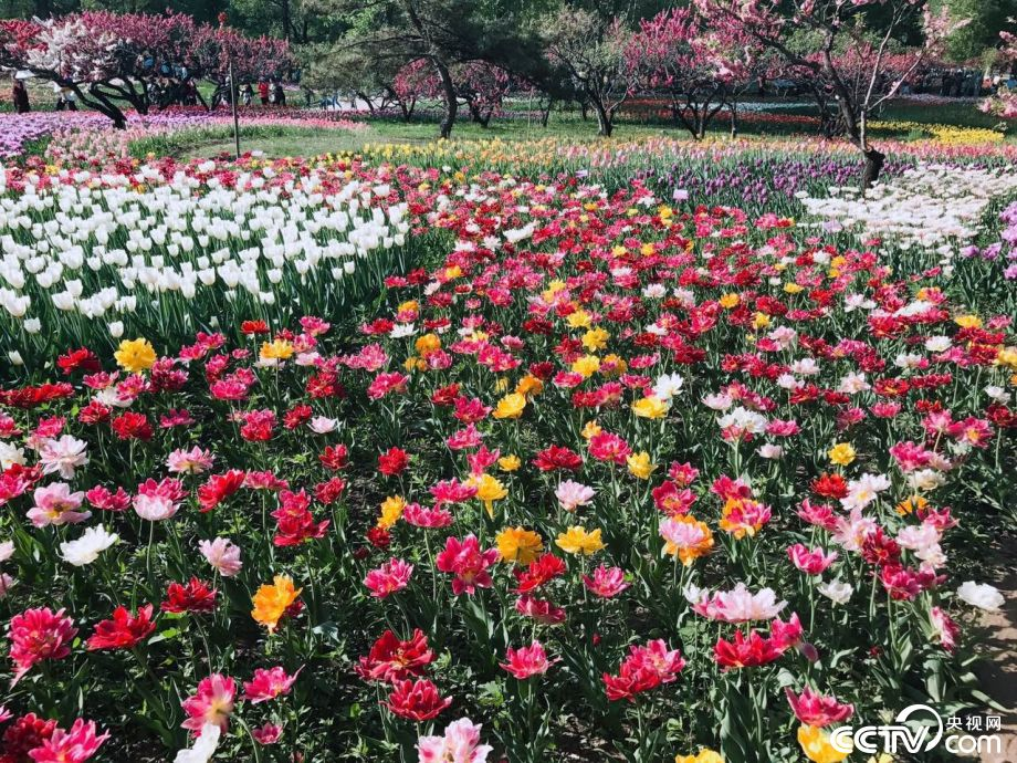 Beijing Botanical Garden in April 2017