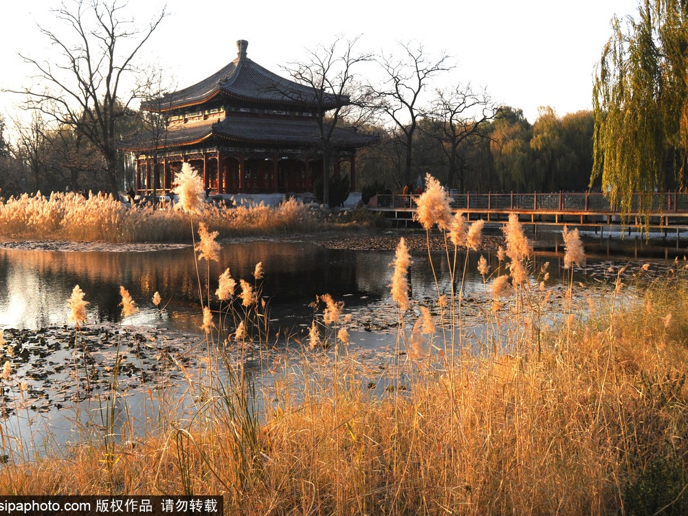 Discover Seasons of Old Summer Palace
